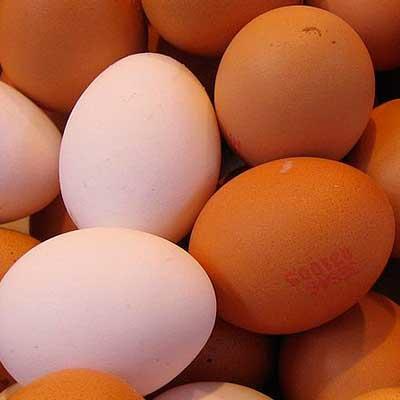 alimento dieta huevo