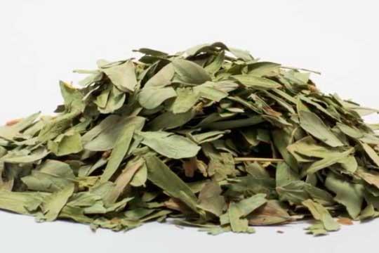 infusion laxante de hojas de sen