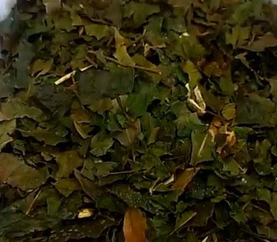 Hojas de chá de brugue para té